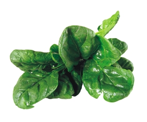 Spinach extract for weight management