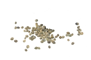Hemp Seed Price and Availability Update